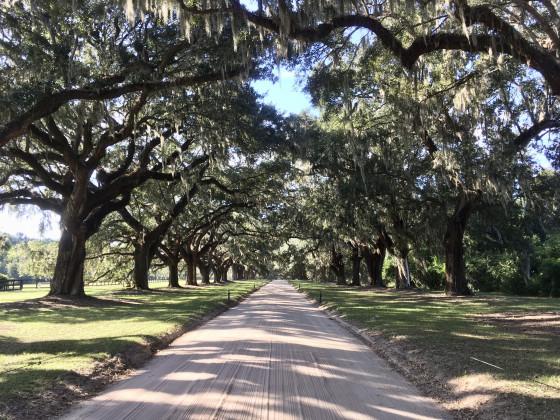 Charleston / Boon Hall Plantation