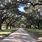 Charleston / Boon Hall Plantation